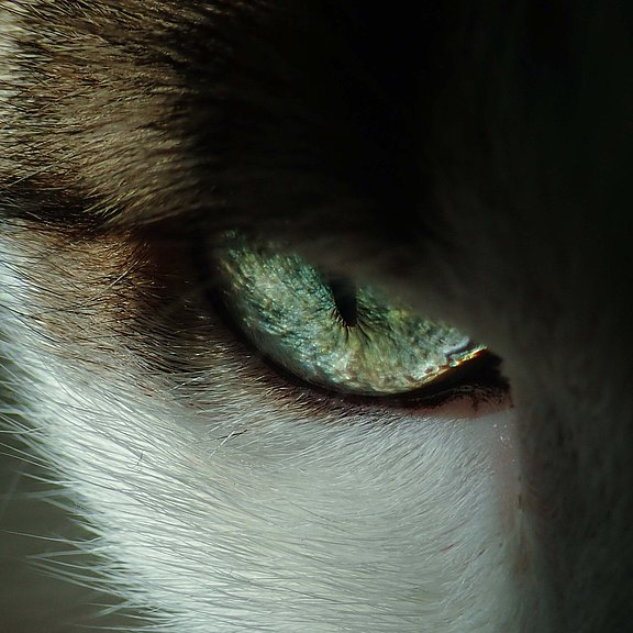 close-up-photo-of-cat-s-eye-3324591.jpg